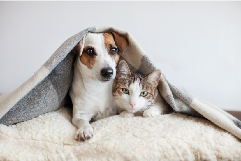A dog and a cat laying down together under a blanket.