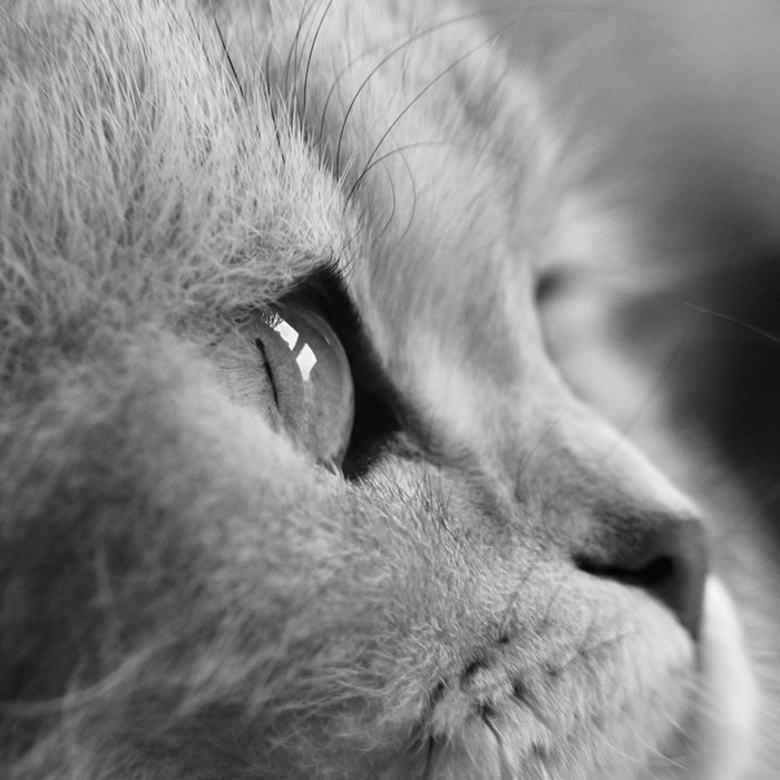 A close up picture of a cat's face.