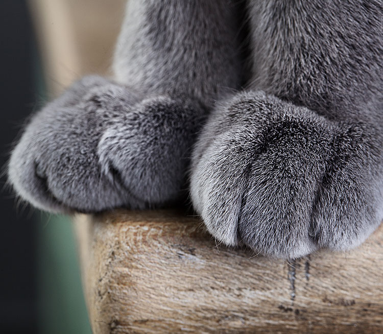 Two grey cat paws.