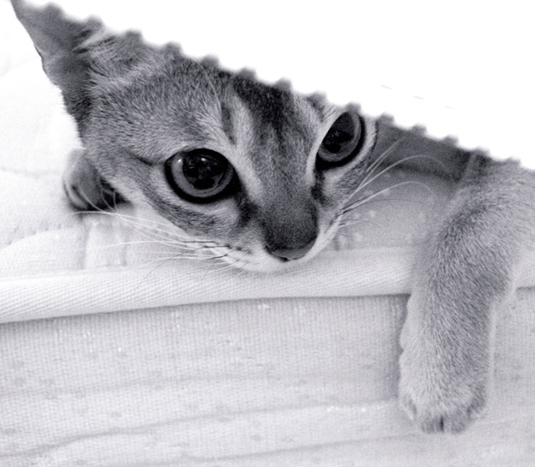 A small kitten laying on a mattress under a blanket.